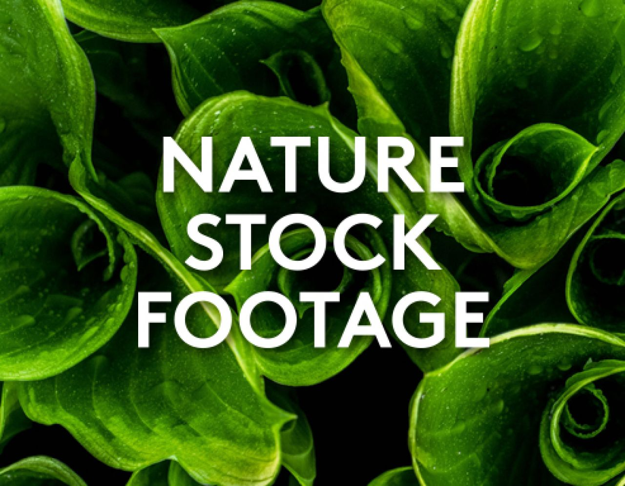 Beautiful HD Nature Stock Footage For Your Next Video | Biteable